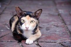 Tillfällig katt på röda tegelplattor Royaltyfri Fotografi