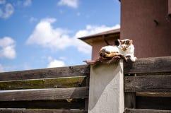 Tillfällig katt på staketet Arkivbild