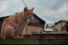 Tillfällig katt på staketet Royaltyfri Fotografi