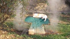 Tillfällig katt som sover på ett lufthål Royaltyfri Bild