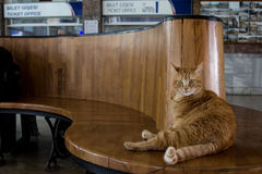 Tillfällig katt som vilar i rum för ` s för Istanbul Sirkeci drevstation väntande, Turkiet Arkivfoton