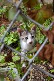 Tillfällig kattunge Royaltyfri Fotografi