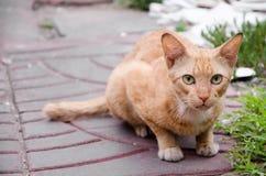 Tillfällig kattunge på röda tegelplattor Arkivbild