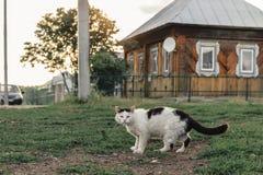 Tillfällig ljust rödbrun katt som går ner vägen på bakgrunden av ett byhus royaltyfri bild