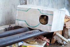 Tillfälliga djur i vintern, hemlöst kattsammanträde på en uppvärmningströmförsörjning, den hemlös fryste katten värme på rör, fol fotografering för bildbyråer