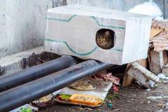Tillfälliga djur i vintern, hemlöst kattsammanträde på en uppvärmningströmförsörjning, den hemlös fryste katten värme på rör, fol royaltyfri foto