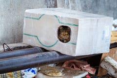 Tillfälliga djur i vintern, hemlöst kattsammanträde på en uppvärmningströmförsörjning, den hemlös fryste katten värme på rör, fol arkivbilder