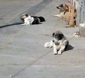 Tillfälliga hundar Fotografering för Bildbyråer