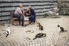 Tillfälliga katter i Istanbul, Turkiet Royaltyfri Fotografi