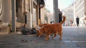 Tillfälliga katter på den Istanbul gatan kalkon 4K arkivfilmer