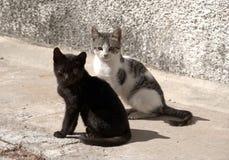 Tillfälliga kattungar som ser fotografen, nästan som, om fråga f Arkivfoton
