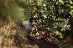 Tillfälligt Cat Photographer nytt foto för 2019, gullig gatakatt arkivfoton
