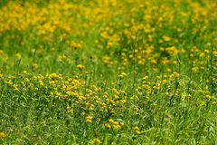 Tillfångatagande av ett härligt blommafält arkivbild