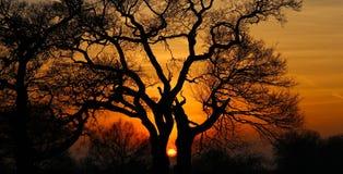 Tillfångatagande av solnedgången Arkivbilder