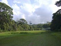 Tillförsel av mat med helikoptern i det naturligt parkerar corcovado Royaltyfri Fotografi