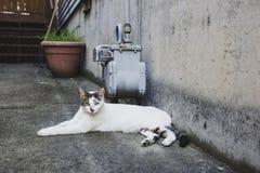 Tillf?llig vit katt som kopplar av i gr?nd under dagen royaltyfri bild