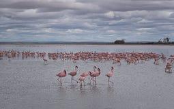 Tillflyktsort för fåglar arkivfoto