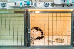 Tillfrisknande katt i veterinär- klinik Arkivfoton