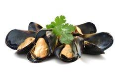tillgängligt arbete för serie för mussla för clippingmatlagningingrediens tillgängligt för clippingarbete Royaltyfri Fotografi