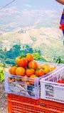 Tillgängligt till salu för tomat royaltyfri fotografi