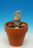 tillgångar som växer pengar, kärnar ur Royaltyfri Fotografi