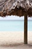 Tillgripa palmträdet på stranden royaltyfri foto