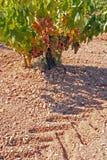 Tilling vineyards Stock Images