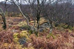 Tilltrasslad skogsmark Arkivfoton