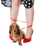 tilltrasslad taxhund royaltyfria foton