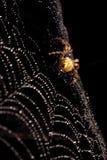 tilltrasslad vävrengöringsduk Royaltyfria Bilder