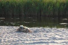 Tilltrasslade fisknät på stranden Arkivfoto