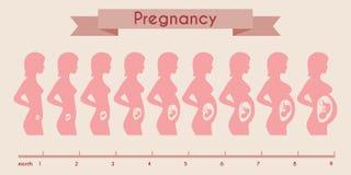 Tillväxt av det mänskliga fostret med den kvinnliga konturn in vektor illustrationer