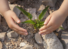 Tillväxt av små plantor Arkivbilder