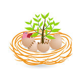 Tillväxt- och gräsplanbegrepp med ägg och redet Arkivfoton