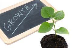 Tillväxtbegrepp med en grön liten växt Arkivbilder
