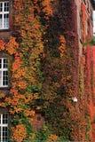 tillväxtmurgröna för 3 golv till Arkivbilder