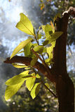 tillväxtrainforest Royaltyfria Bilder