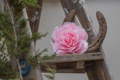 Tillverkade rosa färger steg på en stege för lantlig dekor fotografering för bildbyråer