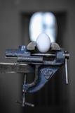 Ägg i fattandet Fotografering för Bildbyråer