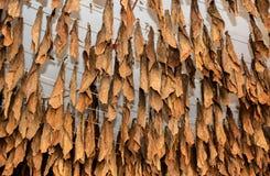 Tillverkning av tobak Royaltyfria Bilder