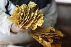 Tillverkning av tobak Fotografering för Bildbyråer