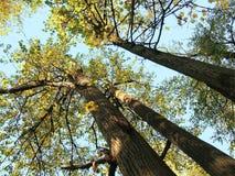 Tilo de los árboles de Sun Foto de archivo libre de regalías