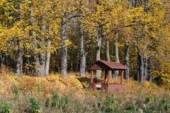 Tilo del otoño Fotos de archivo
