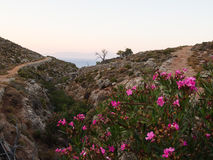 Tilos brink with flowers and trees Royalty Free Stock Image