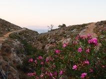 Tilos-Rand mit Blumen und Bäumen Lizenzfreies Stockbild