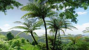 Tilt down shot of a palm tree. A medium shot tilting down of a palm tree. Jungle stock video