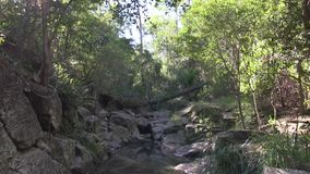 Tilt down to see sky and sun reflected in the water of West Ithaca Creek, Brisbane Australia. stock video footage