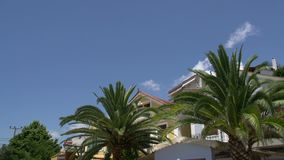 Tilt from palmtree to street in limenaria, Thassos, Greece stock video footage