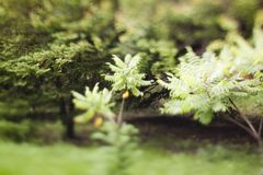 Tilt shift effect on the photo top view landscapes 3 Royalty Free Stock Photo