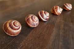 Tilt-Shift escargots on a wooden table. Royalty Free Stock Image